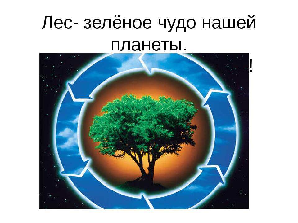 Лес- зелёное чудо нашей планеты. Не губите, берегите лес!