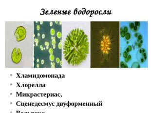 Зеленые водоросли Хламидомонада Хлорелла Микрастериас, Сценедесмус двуформенн