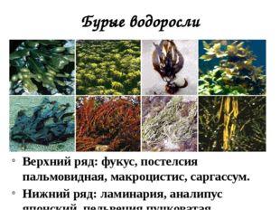 Бурые водоросли Верхний ряд: фукус, постелсия пальмовидная, макроцистис, сарг