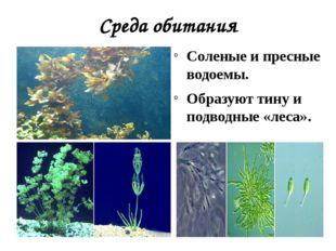 Среда обитания Соленые и пресные водоемы. Образуют тину и подводные «леса».