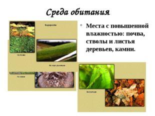 Среда обитания Места с повышенной влажностью: почва, стволы и листья деревьев