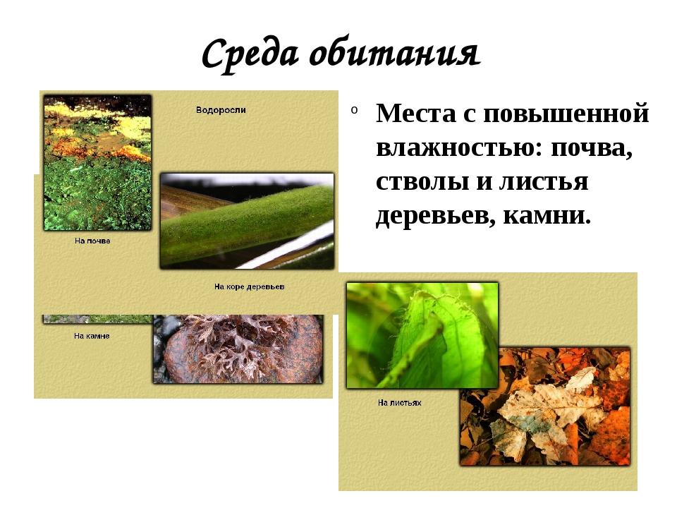 Среда обитания Места с повышенной влажностью: почва, стволы и листья деревьев...