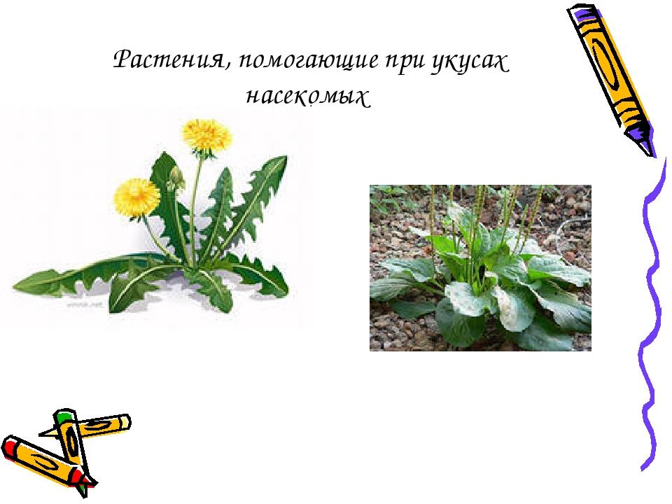 Растения, помогающие при укусах насекомых