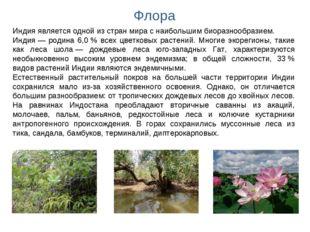 Флора Индия является одной из стран мира с наибольшим биоразнообразием. Индия