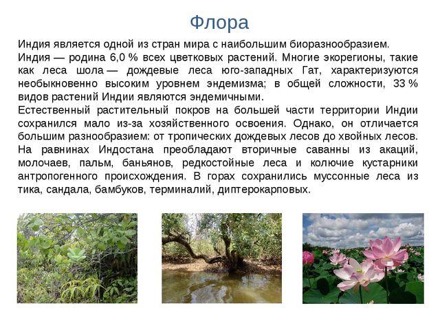 Флора Индия является одной из стран мира с наибольшим биоразнообразием. Индия...