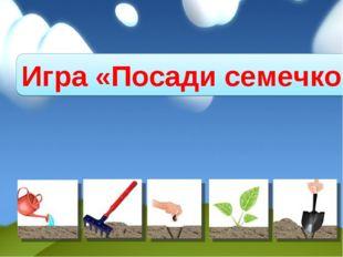 Игра «Посади семечко»
