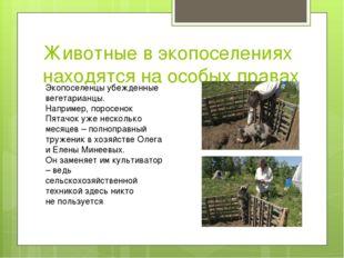 Животные в экопоселениях находятся на особых правах Экопоселенцы убежденные в