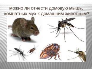можно ли отнести домовую мышь, комнатных мух к домашним животным?