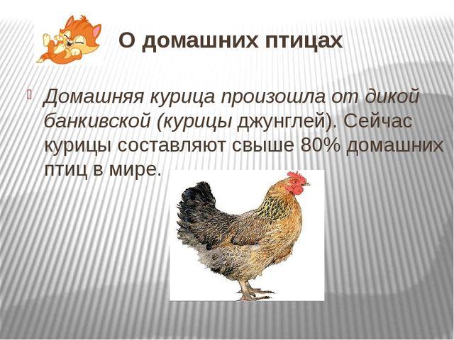 О домашних птицах Домашняя курица произошла от дикой банкивской (курицы джунг...