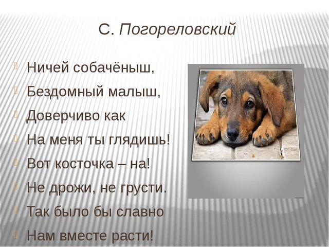 С. Погореловский Ничей собачёныш, Бездомный малыш, Доверчиво как На меня ты г...