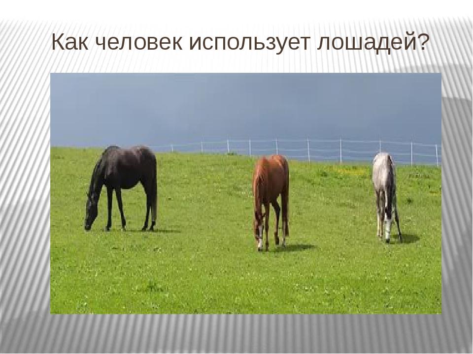 Как человек использует лошадей?