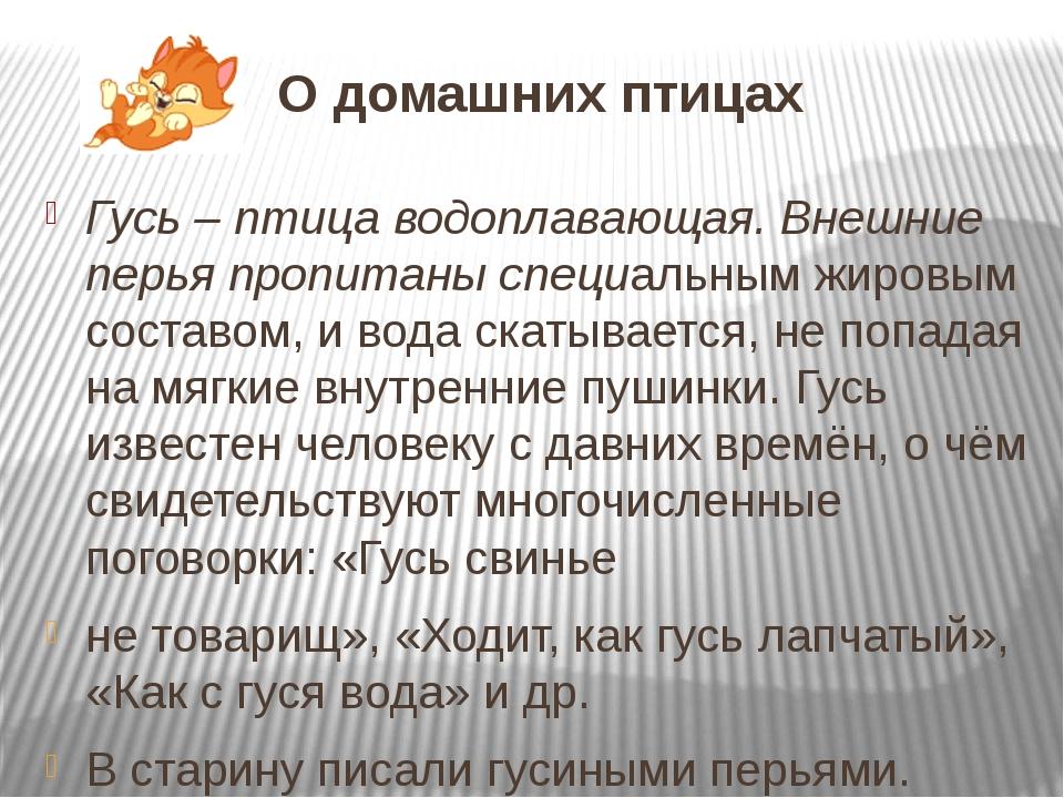 О домашних птицах Гусь – птица водоплавающая. Внешние перья пропитаны специал...