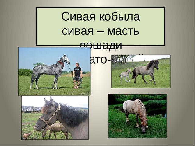 Сивая кобыла сивая – масть лошади серовато-сизый