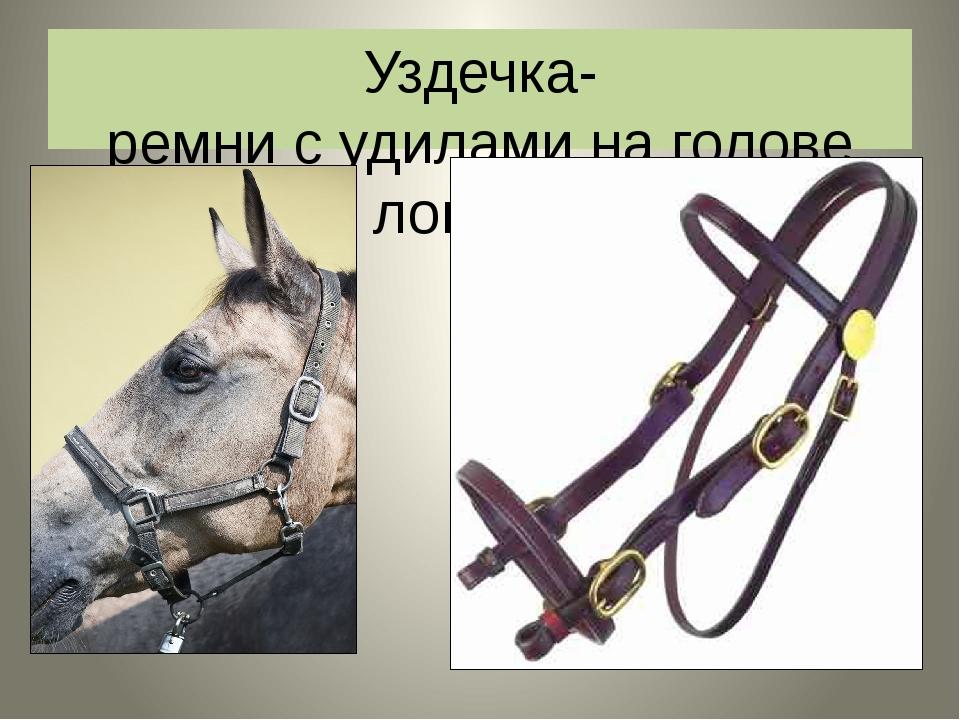 Уздечка- ремни с удилами на голове лошади