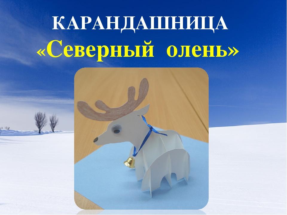 КАРАНДАШНИЦА «Северный олень»