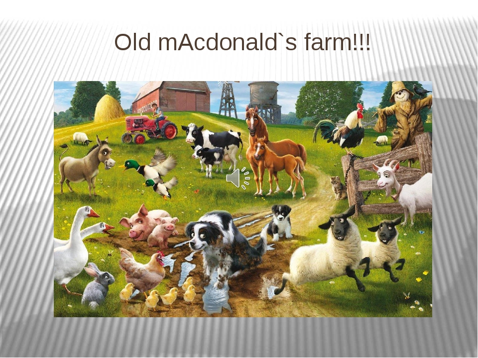 Old mAcdonald`s farm!!!