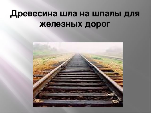 Древесина шла на шпалы для железных дорог