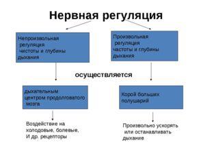 Нервная регуляция Непроизвольная регуляция чистоты и глубины дыхания Произвол