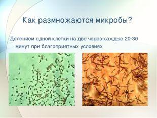 Как размножаются микробы? Делением одной клетки на две через каждые 20-30 мин