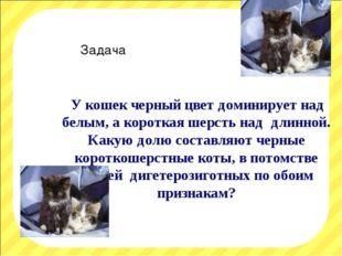У кошек черный цвет доминирует над белым, а короткая шерсть над длинной. Как