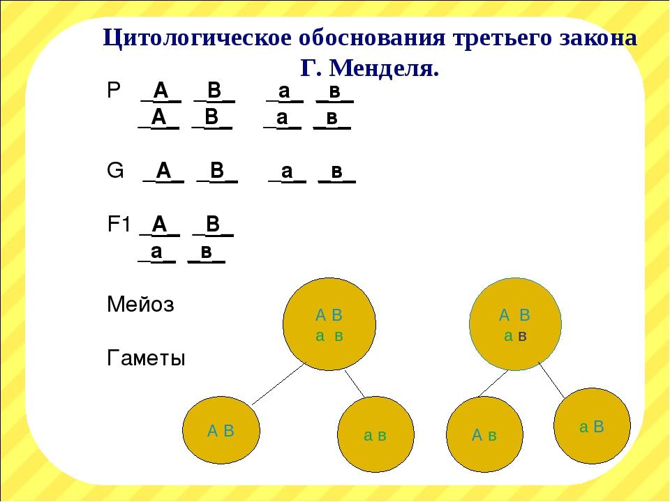 Цитологическое обоснования третьего закона Г. Менделя. Р _А_ _В_ _а_ _в_ _А_...