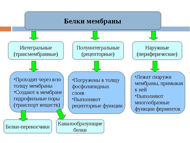 Белки мембраны Интегральные (трансмембранные) Наружные (периферические) Полуи...