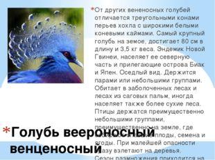 Голубь веероносный венценосный От других вененосных голубей отличается треуго