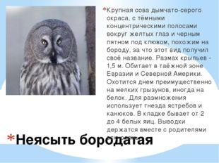 Неясыть бородатая Крупная сова дымчато-серого окраса, с тёмными концентрическ