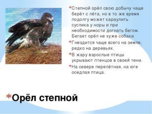 Орёл степной Степной орёл свою добычу чаще берёт с лёта, но в то же время под