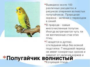 Попугайчик волнистый Выведено около 100 различных расцветок и рисунков оперен