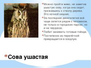 Сова ушастая Можно пройти мимо, не заметив ушастую сову, когда она сидит, при