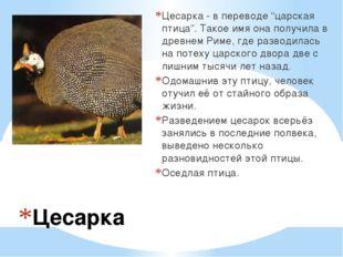 """Цесарка Цесарка - в переводе """"царская птица"""". Такое имя она получила в древне"""