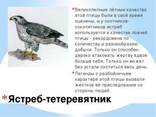 Ястреб-тетеревятник Великолепные лётные качества этой птицы были в своё время