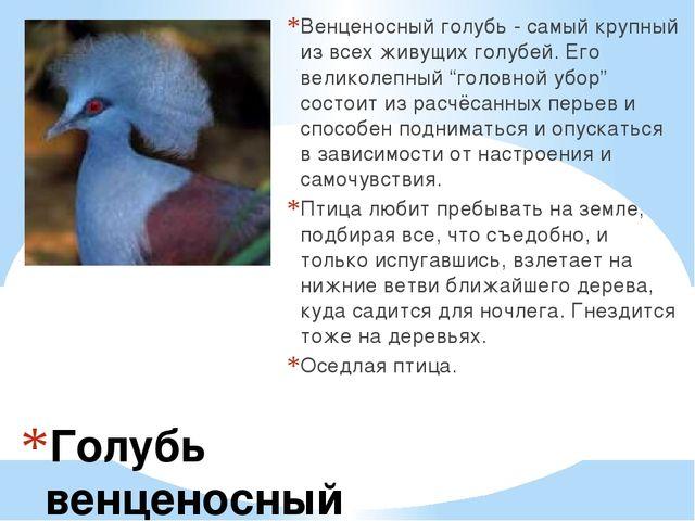 Голубь венценосный Венценосный голубь - самый крупный из всех живущих голубей...