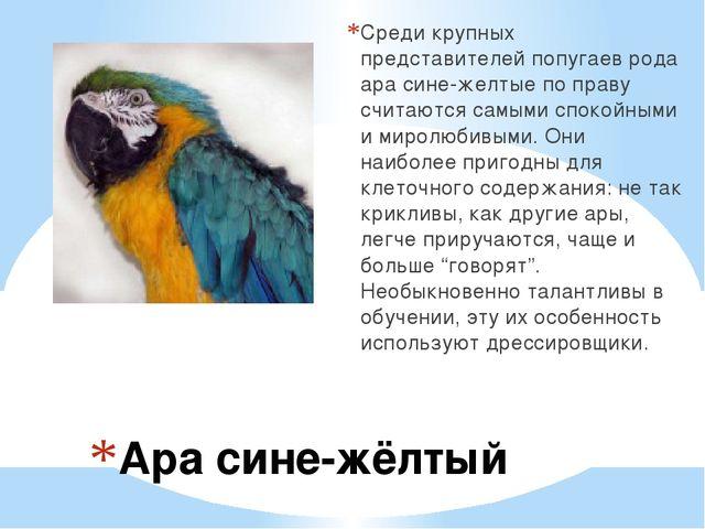 Ара сине-жёлтый Среди крупных представителей попугаев рода ара сине-желтые п...