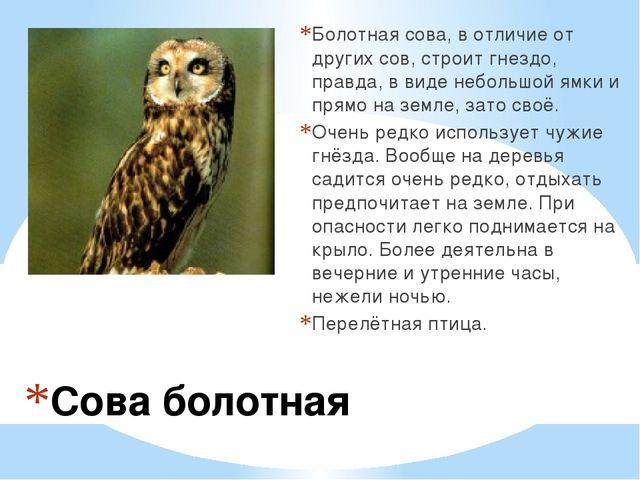 Сова болотная Болотная сова, в отличие от других сов, строит гнездо, правда,...