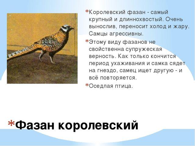 Фазан королевский Королевский фазан - самый крупный и длиннохвостый. Очень в...