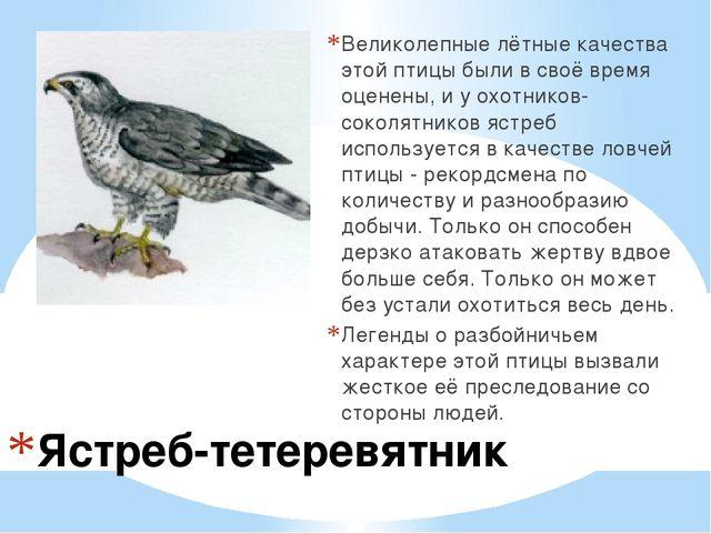 Ястреб-тетеревятник Великолепные лётные качества этой птицы были в своё время...