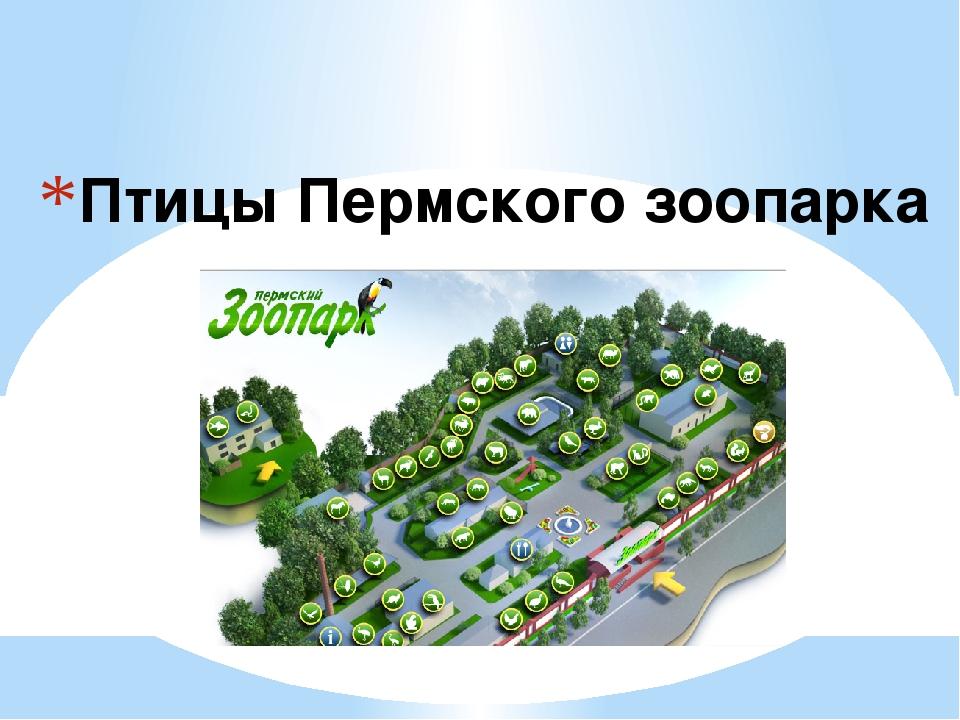 Птицы Пермского зоопарка
