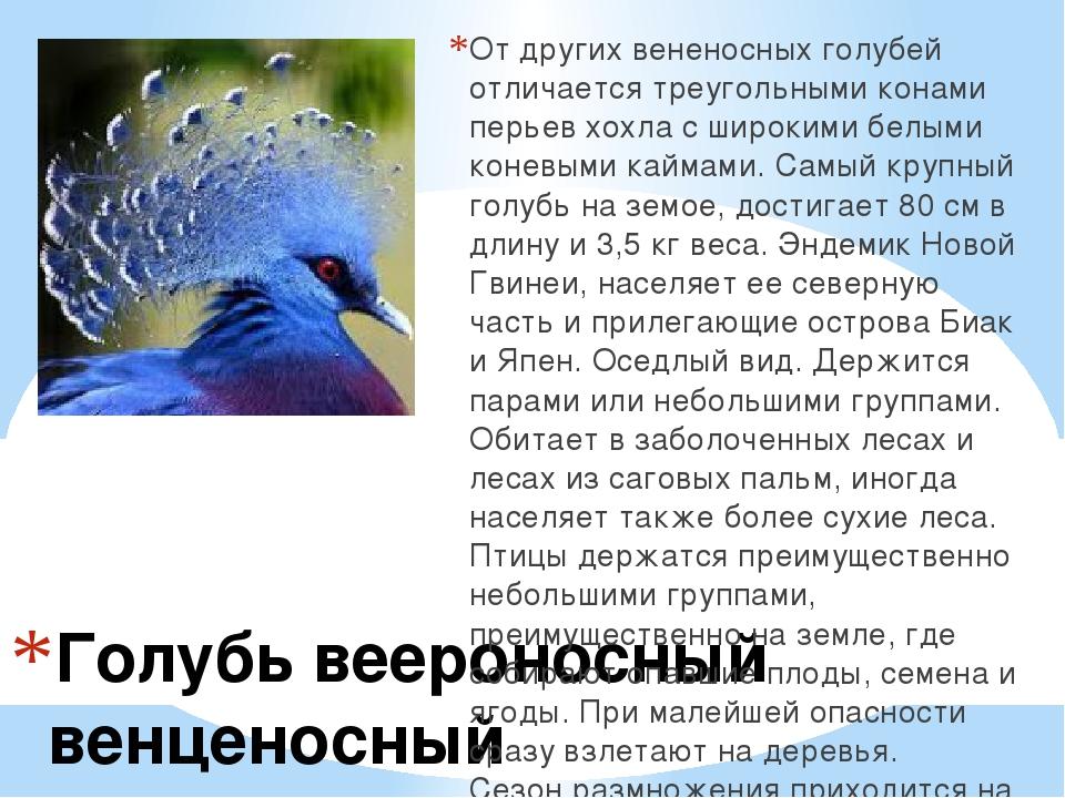 Голубь веероносный венценосный От других вененосных голубей отличается треуго...