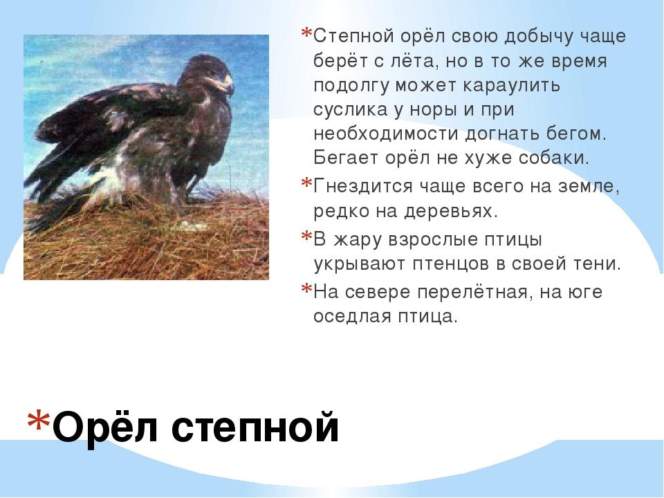 Орёл степной Степной орёл свою добычу чаще берёт с лёта, но в то же время под...