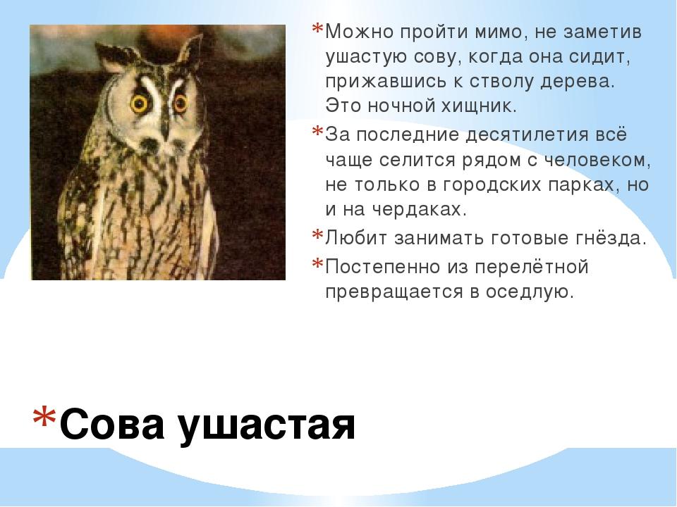Сова ушастая Можно пройти мимо, не заметив ушастую сову, когда она сидит, при...