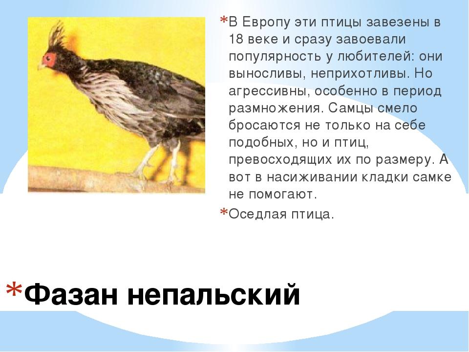 Фазан непальский В Европу эти птицы завезены в 18 веке и сразу завоевали попу...