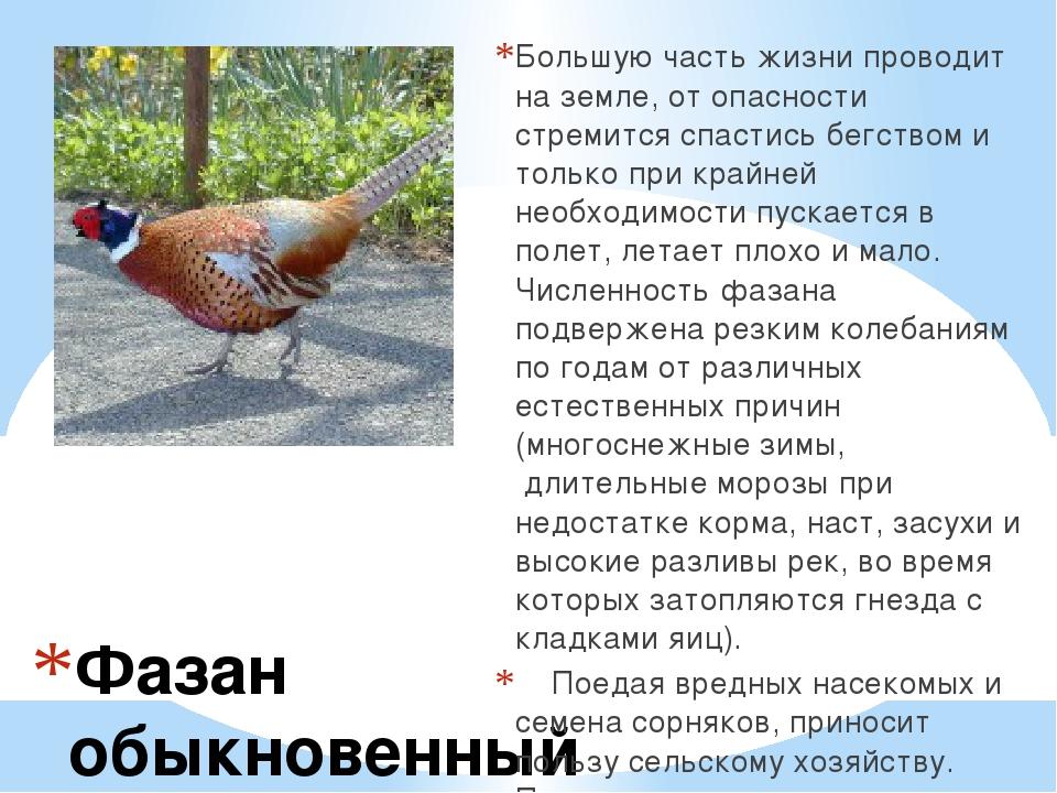 В клетке зоопарка токовал глухарь егэ русский