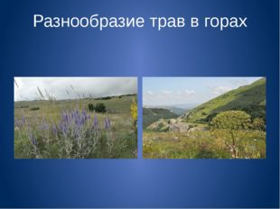 Разнообразие трав в горах