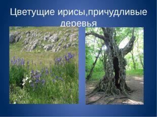 Цветущие ирисы,причудливые деревья