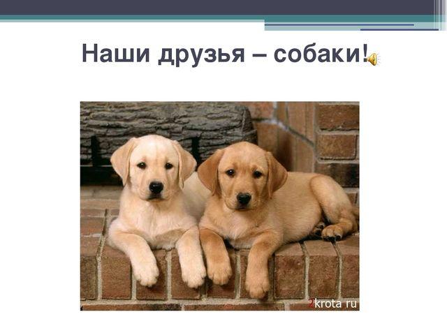 Наши друзья – собаки!