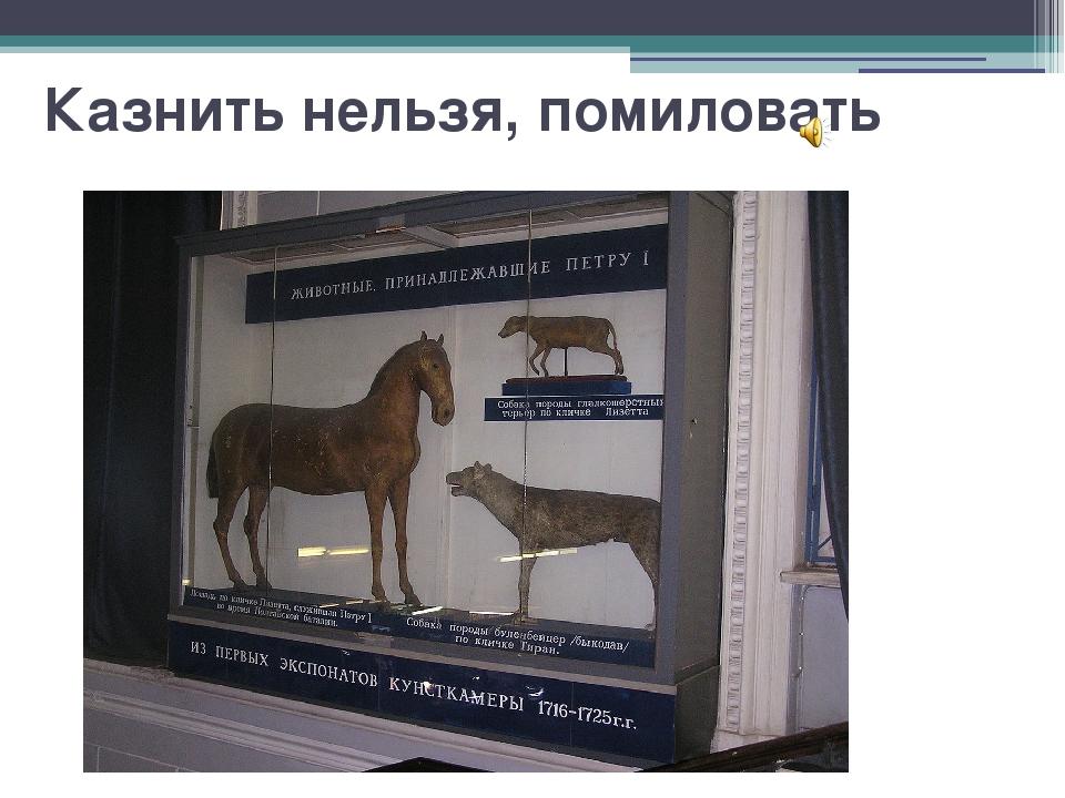 Казнить нельзя, помиловать Данцигский булленбейцер и терьер — любимые собаки...