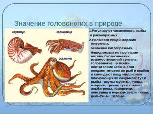 Значение головоногих в природе 1.Регулируют численность рыбы и ракообразных 2