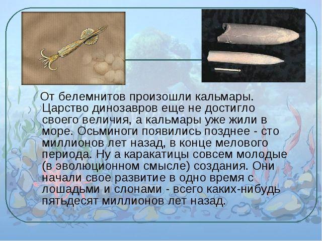 От белемнитов произошли кальмары. Царство динозавров еще не достигло своего...